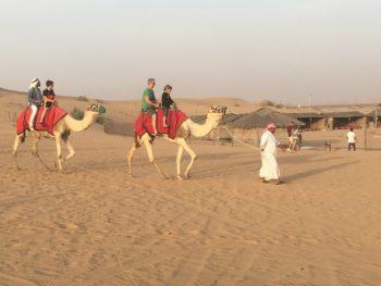 Balade en dromadaire - Safari Dubai