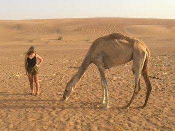 Dromadaire dans le désert de DUbai