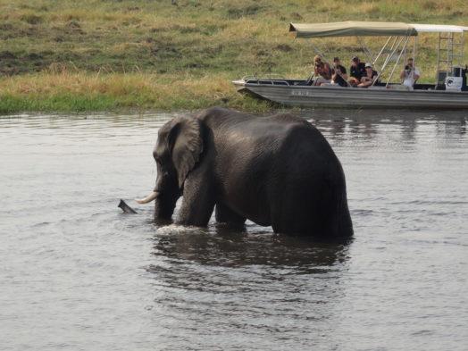 Excursion Chobe National Park