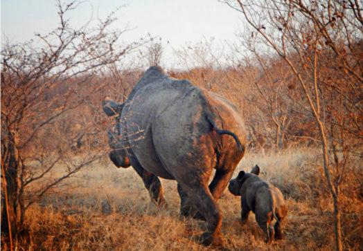 Safari chutes victoria - credit shearwater