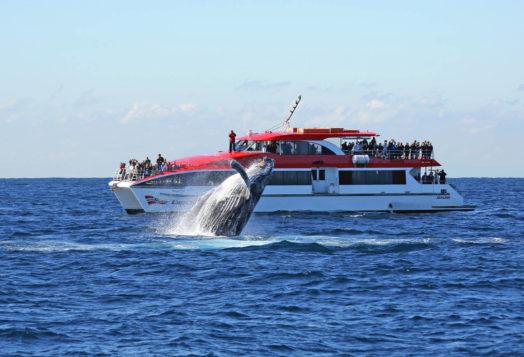 Voir des baleines à Sydney