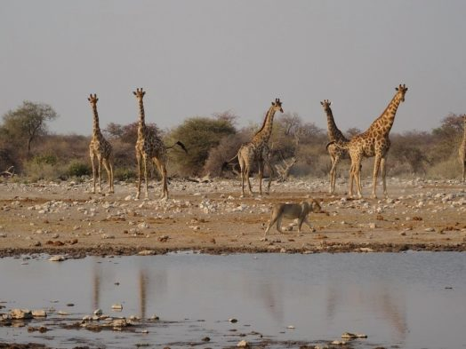 Visite d'Etosha - Safari en Namibie