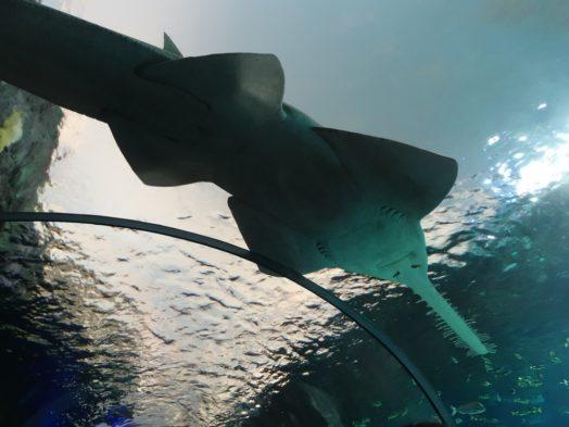 Visite de l'Aquarium Ripleys - Toronto