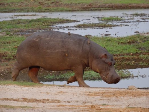 Visite du Caprivi Strip - Safari en Namibie