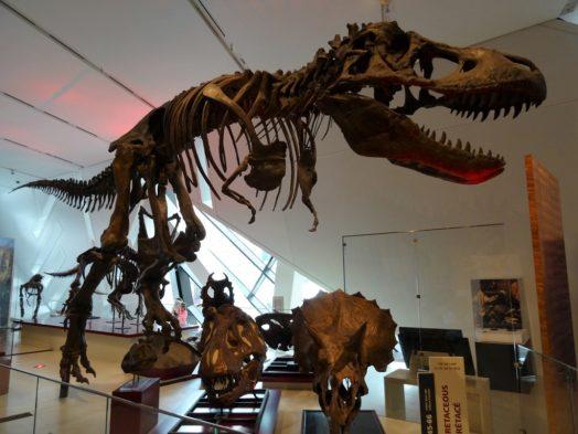 Visite du Musée Royal Ontario - Toronto