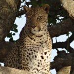 Visiter l'Afrique du Sud - Kruger Park