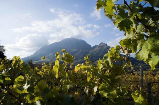 Visiter Stellenbosch et les Winelands - Afrique du Sud