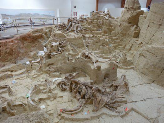 Bons Plans Dakota du Sud - Site des mammouths