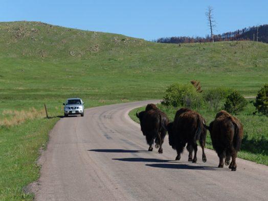 Visiter Dakota du Sud - Custer State Park